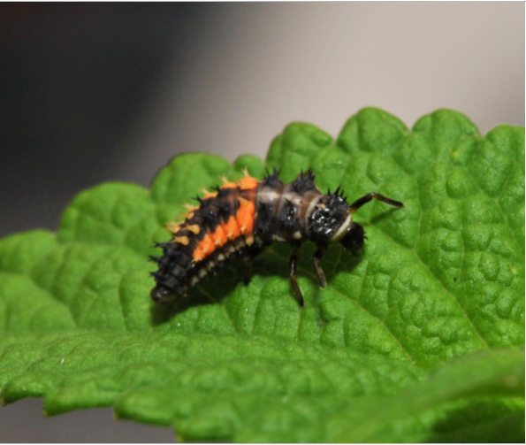 beneficial-insects in small home garden